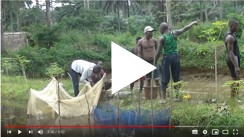 Guinee video 1a